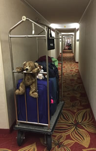 Photo of teddy bear on the front of a full luggage cart in a hotel hallway