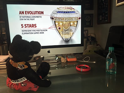 "Burlington in Nationals boxer shorts watches the ring unveiling on a desktop iMac, showing the side of the ring with ""Fight FInished"" moto and 5 stars representing five postseason elimination games won."