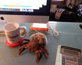 The furry stuffed spider doll sits on a glass desktop next to an Apple iMac and between a Shakespeare Canon mug, a calculator, and a hard drive, with memorabilia of Chaplain Minton in the background